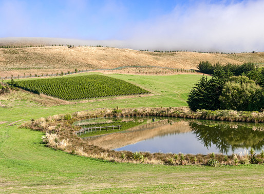 meet aotearoa new zealand fine wine estates