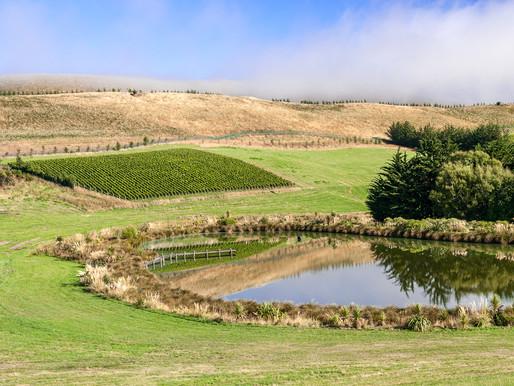 meet aotearoa new zealand fine wine estates