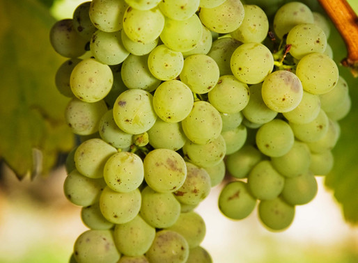 what are organic winemakers drinking on #sauvblancday?