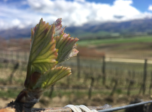 central otago leads the way in organic viticulture