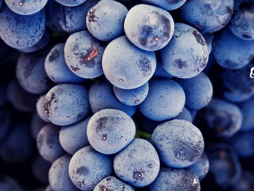 organic wine week 2020 - the highlight reel