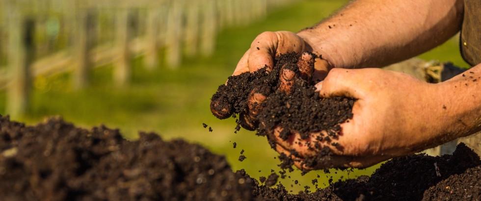Hands-in-compost-2.jpg