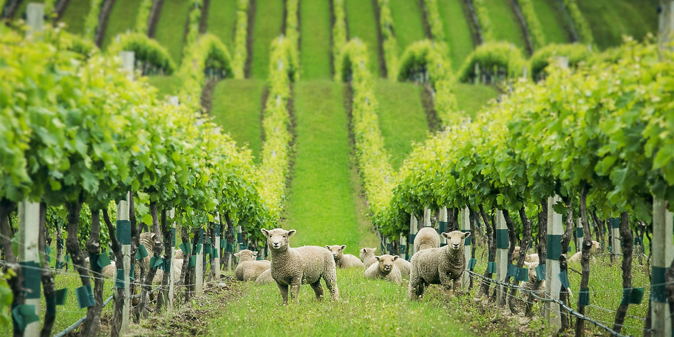 The Rise of Organic Wine in NZ Webinar led by Emma Jenkins, MW   Sept 23 8am NZT   Sept 22 1pm PST, 4pm EST,  9pm UK