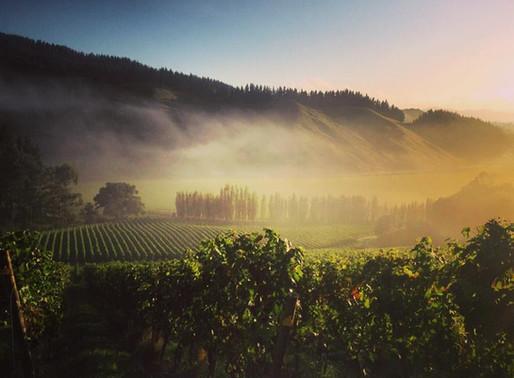 making pinot noir in gisborne with james millton of millton vineyards   #3