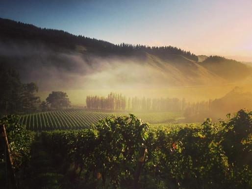 making pinot noir in gisborne with james millton of millton vineyards | #3