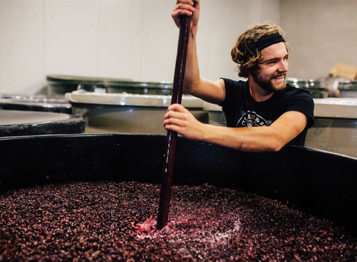 answering the all important questions about making organic pinot noir in waipara #6