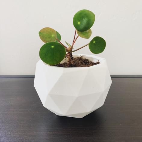 Pot - design by Jeremy Bacoup