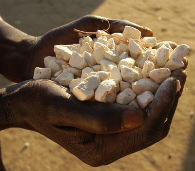 Pulpe de baobab