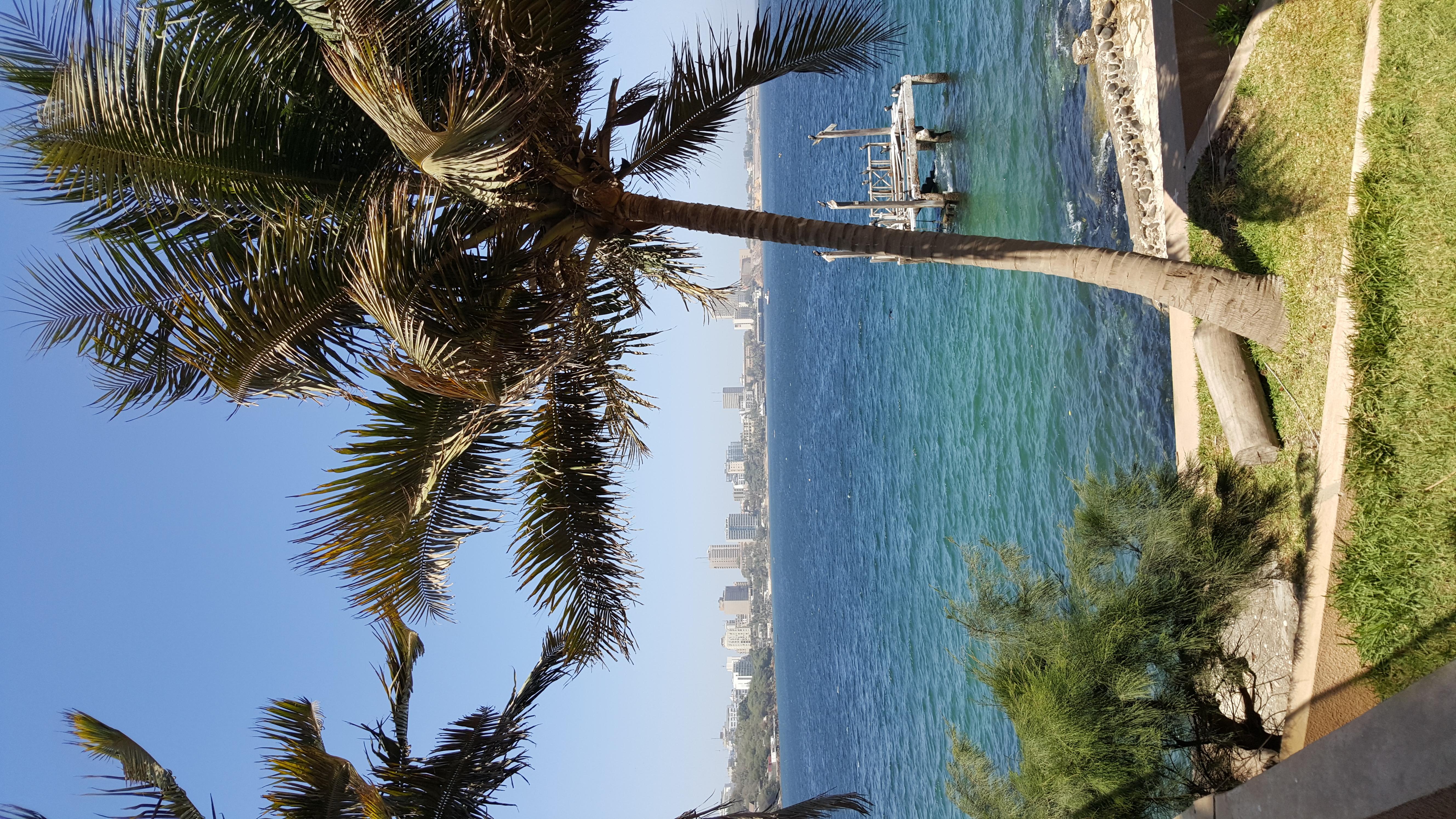 Palmier et Ocean Atlantique