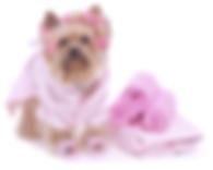 Fort Myers Dog Grooming Yorkie Bath