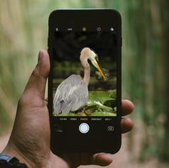 Kincora Heron iPhone Kaitlynn Stone.jpg