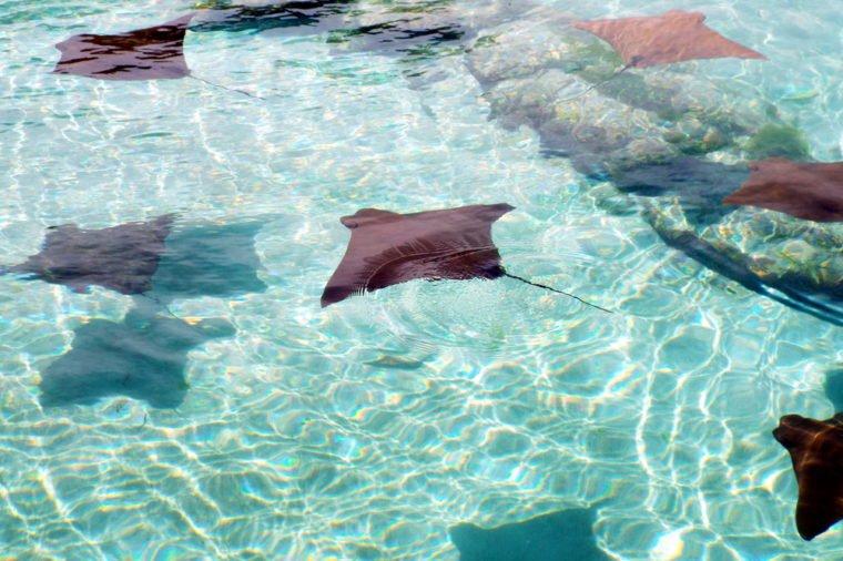 Atlantis Bahamas Paradise Island Coral Towers Vacation