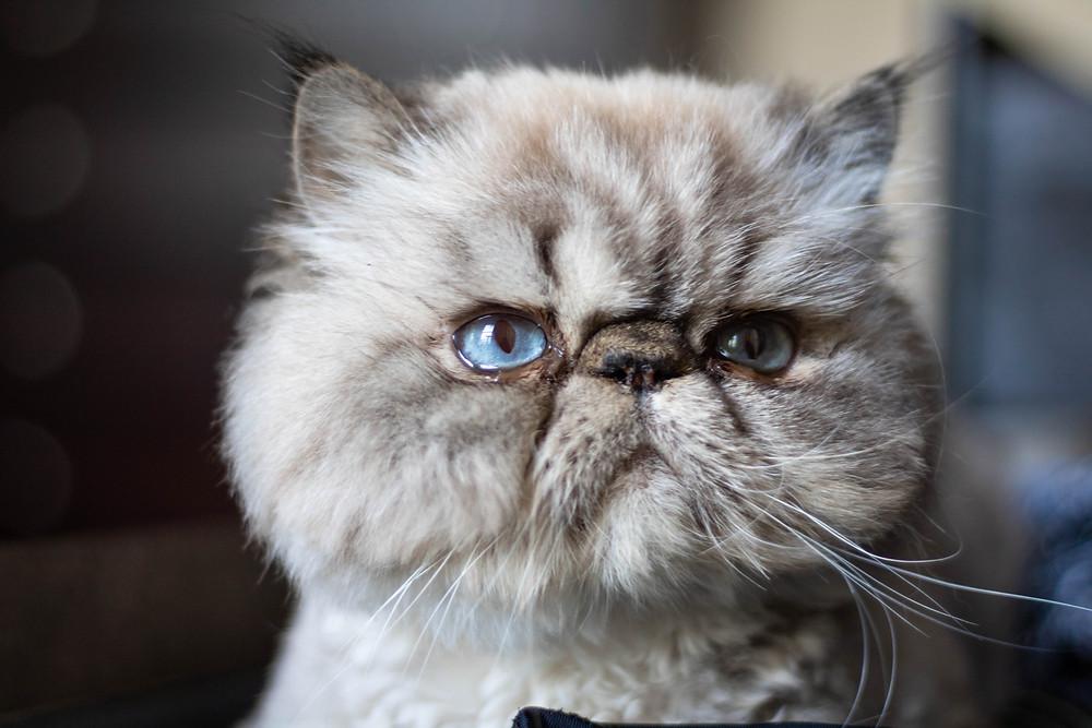 Marvyn the Cat by Kaitlynn Stone @MessyMarvyn