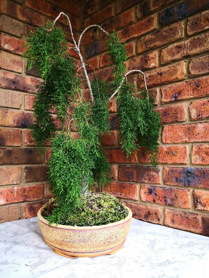 Michael M's Huon Pine