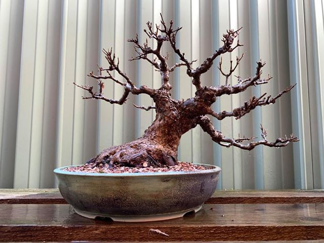 Matts tree