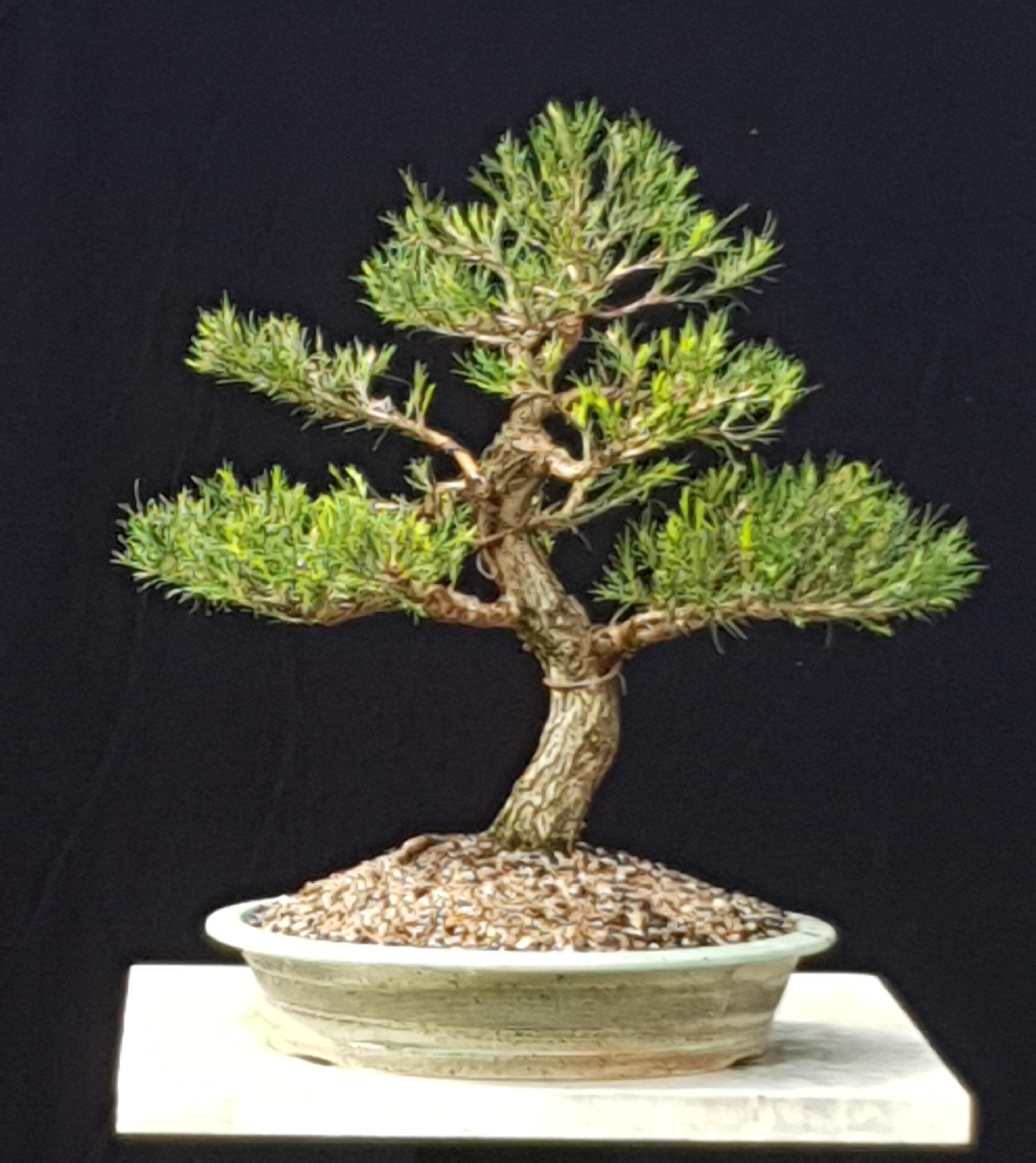 Ken C's tree