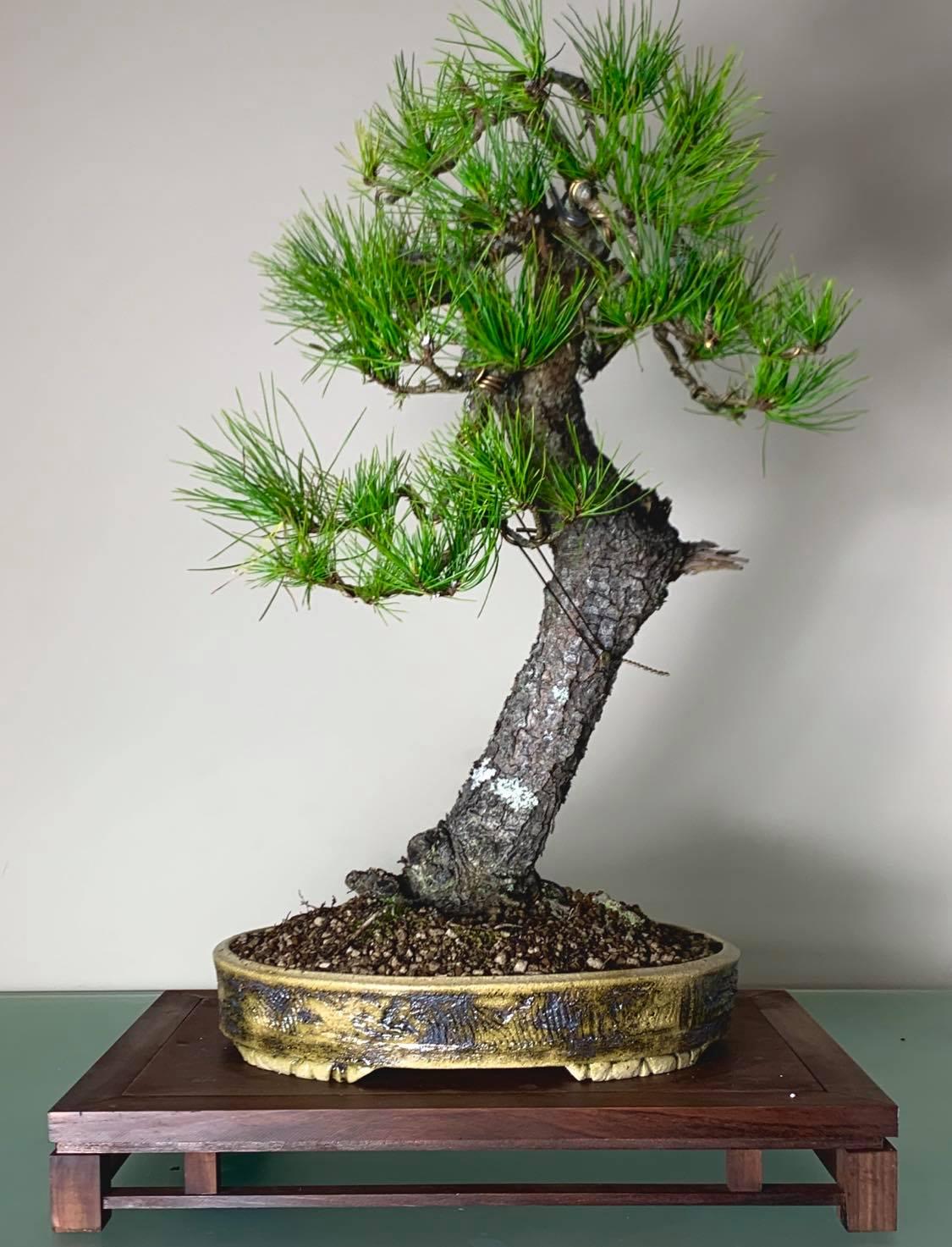 Martins tree