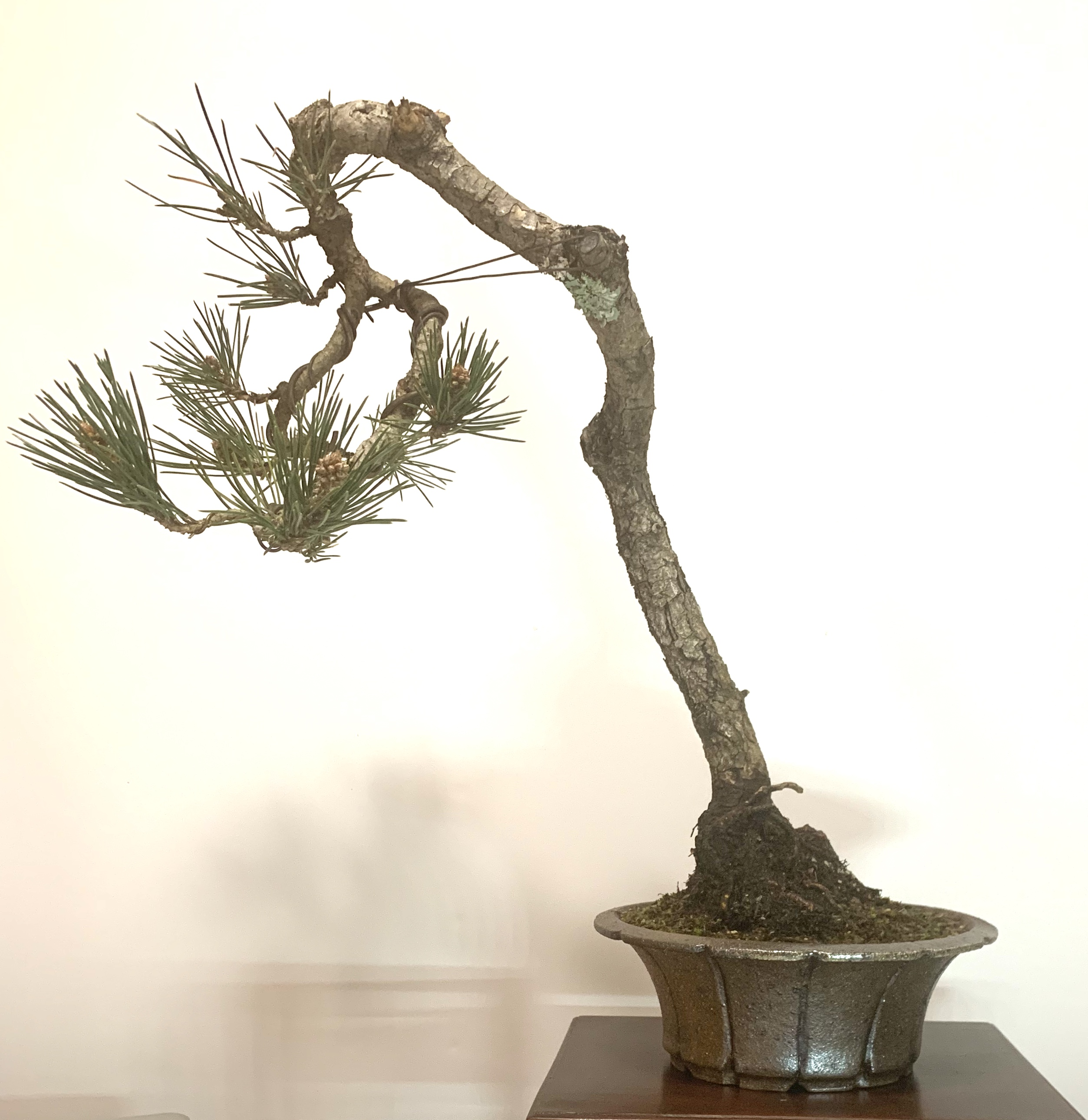 Peter J's Pine