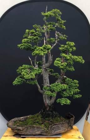 Hinoki Cypress freeform bark pot