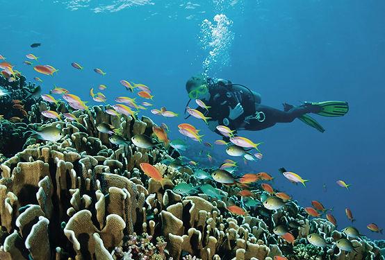 four-seasons-maldives-snorkel-992x6721.j