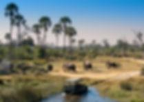 okavango-delta-safari-game-drive-botswan