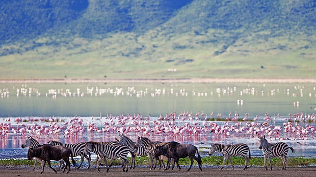 ngorongoro-crater-floor-teaming-with-gam