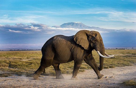 Kenya_Amboseli_CorletteWesselsWildlifeEl