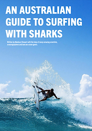 An Australian Guide to Surfing with sharks