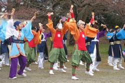 20100411_柴田桜祭り&よさこい-004