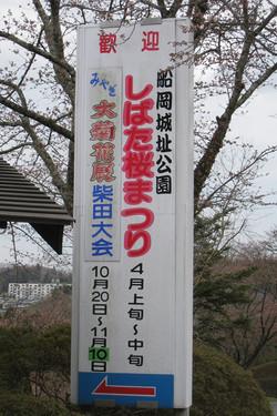 20100411_柴田桜祭り&よさこい-000