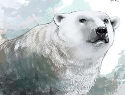 polarne