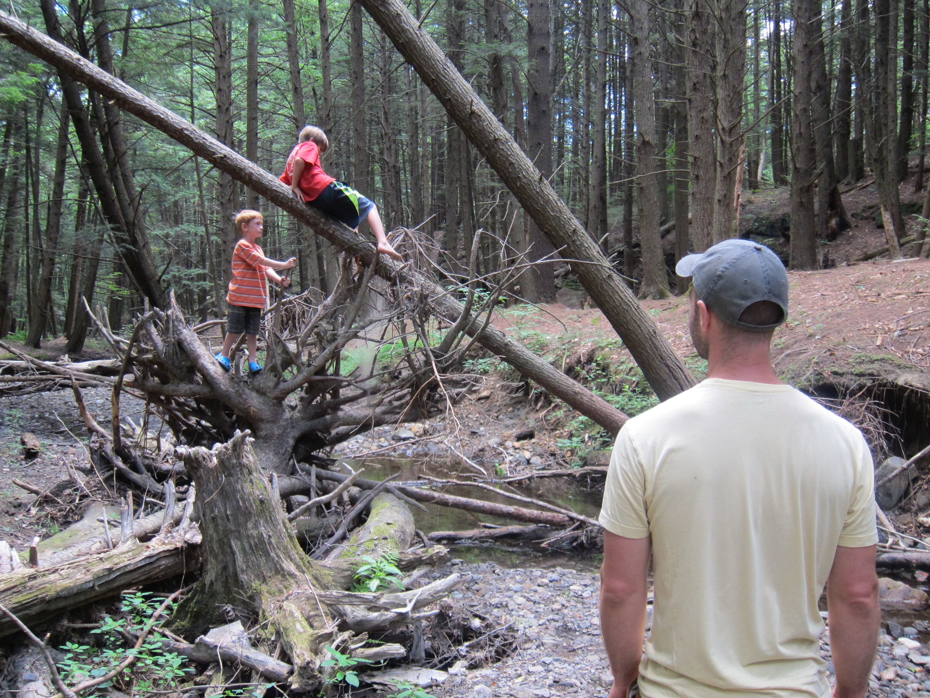 Weeks' Trail Jungle Gym