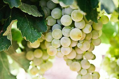 Druiven wit pitloos 500gram
