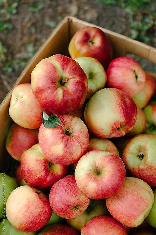 Appels Jonagold