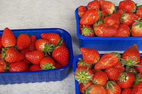 Hollandse Aardbeien  500 gram
