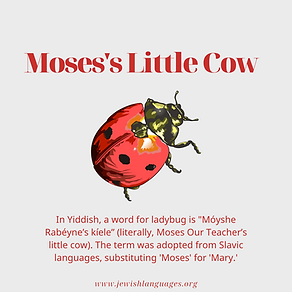 Moses's Little Cow.png