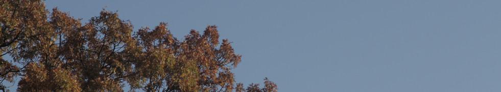 an autumn moon
