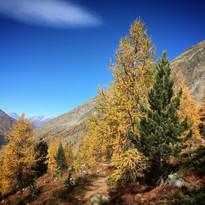 Autumn Heidbodmen