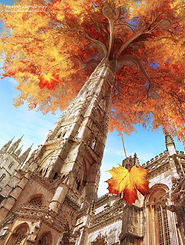 1._Cathedral_Flame_Tree.jpg