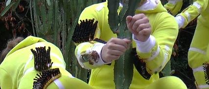bild3 kaktus.jpg
