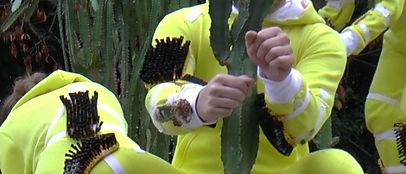 Kopie von bild3 kaktus.jpg