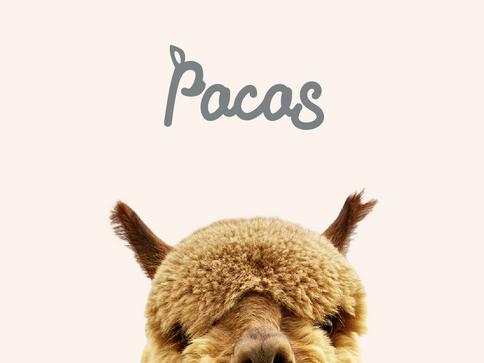 PACAS - BRAND IDENTITY, SOCIAL