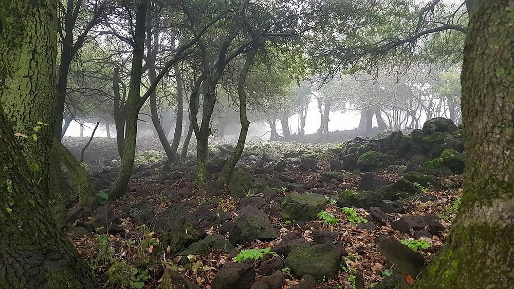 מסלול מעגלי ברמת הגולן - יער אודם