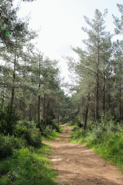 מסלול מעגלי ביער עופר בכרמל