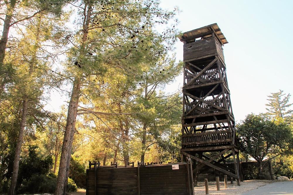 חומה ומגדל ביער חניתה