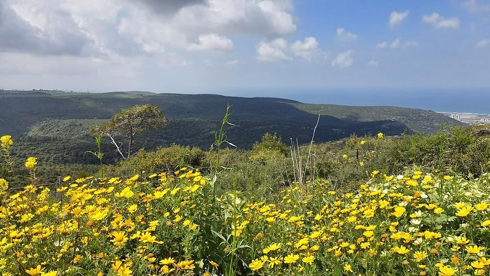 נוף של פרחים בכרמל