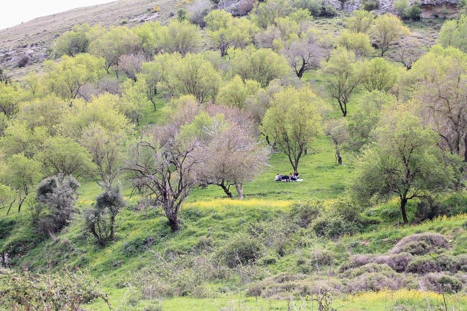 נוף עצים ופריחה בנחל גוש חלב
