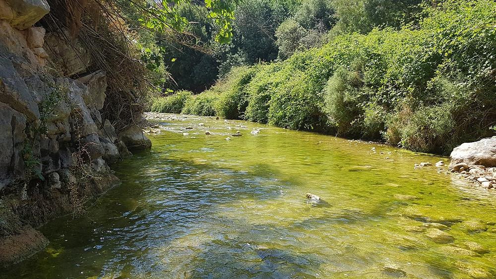 טיול מים בנחל דישון למשפחות