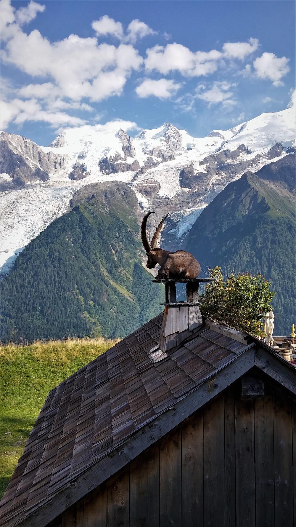 פארק האיילים באלפים הצרפתיים