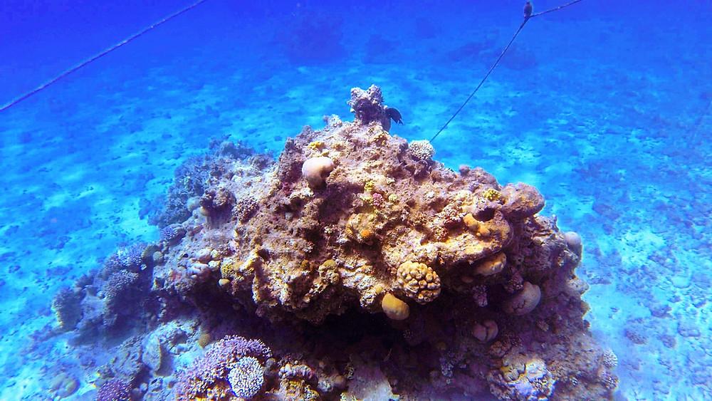 חוף אלמוג באילת שנירקול